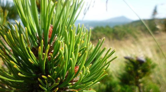 Krokonose Nationalpark