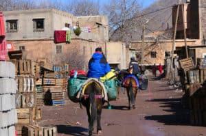 Mulddyr i landsby i Atlasbjergene
