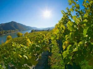 Wachau vinområde