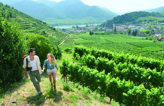 Vandreferie vinmarker